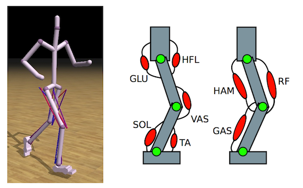 Optimizing Locomotion Controllers Using Biologically-Based Actuators and Objectives